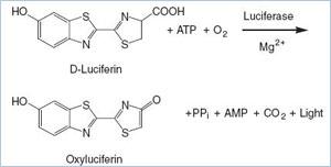 44-71684luciferinturnoverschematic