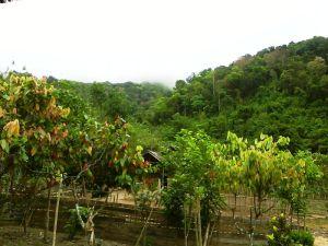 Kampung Tua - Konawe Selatan