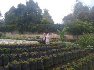 Kebun Strawberry - Lembang