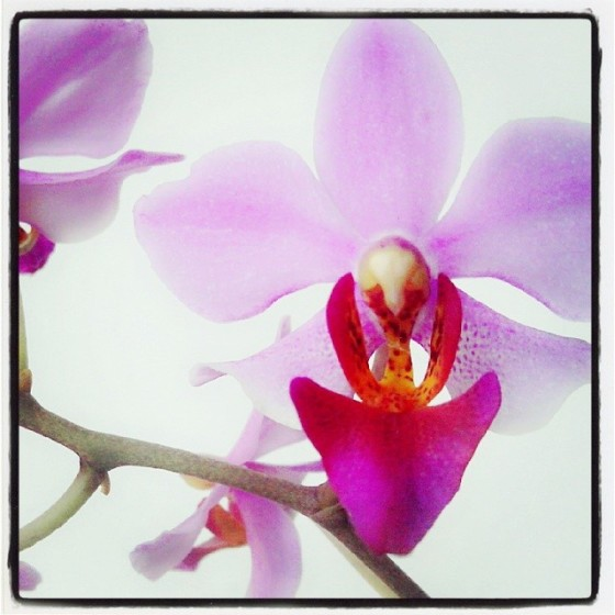Purple Orchid from My Instagram